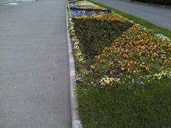 IMG00975 (chicore2011) Tags: flowers evening municipal scapes