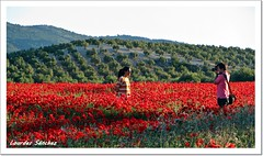 Fotografiando entre Amapolas y Olivos (Lourdes S.C.) Tags: paisaje personas campo olivos fotgrafo olivares amapolas campodeamapolas