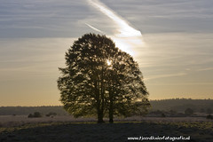 _TKF5682 (Tjeerdknierfotografie) Tags: landscape zon landschap hogeveluwe zonsopkomst nphogeveluwe npdhv