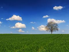 The Perfect Tree (Radek Lokos Fotografie) Tags: blue sky tree green clouds canon eos reisen outdoor wolken minimal freiburg landschaft baum 6d radeklokosfotografie