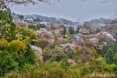 Yoshinoyama (Tatters ) Tags: houses japan village cherryblossom worldheritage yoshino yoshinoyama oloneo