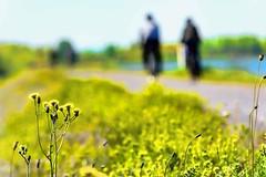 Auf dem Damm (freitagkatja) Tags: natur damm rhein fahrrad blumenwiese badenwrtemberg oberrhein