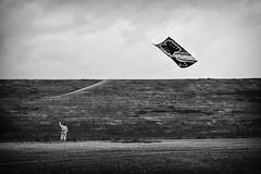 beauty landing (StefanSpeidel) Tags: japan kasukabe odako festival kite