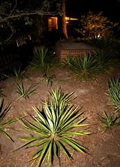 IMG_8651 (jalexartis) Tags: lighting nightphotography night yard dark landscape lights backyard landscaping shrub yucca shrubbery yuccaplant