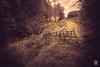 2016-05-02_Q8B8488 © Sylvain Collet.jpg (sylvain.collet) Tags: old france grass work countryside alone sad bretagne triste travail labour britanny plowing campagne isolated seul ancien paysan herbes désolé labeur lesgéantsdekerzerho