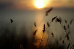 sunset in pula (marcoaj) Tags: sunset sea sun beach nature water grass backlight twilight pentax f14 croatia refelction k5 pula marcoajelli ajelli