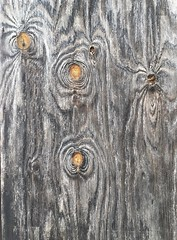 """.......beauty and imperfection go together wonderfully. (BenitaMarquez) Tags: california door wood orange tree texture nature beautiful lines outdoors worship pattern god gray grain bayarea livermore knots northerncali crosswindschurch"
