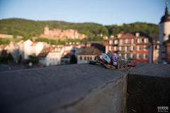 Love Locks at the Alte Brcke (davidgevert) Tags: bridge germany bokeh lock d750 heidelberg lovelock travelphotography altebrcke nikon2470mmf28 wideanglebokeh davidgevert gevertphotography nikond750