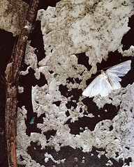 Happy Sunday (life stories photography) Tags: summer white texture june square moth squareformat frontporch iphone 2016 iphoneography instagramapp uploaded:by=instagram