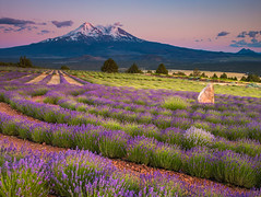 Mt Shasta and lavender farm at sunset (Earl Robicheaux Photography, LLC) Tags: california ca sunset plants usa mountain flower field horizontal forest landscape volcano evening twilight scenery glow mt sundown dusk unitedstatesofamerica farming lavender peak highpoint hills valley crop land northamerica environment late crops agriculture ornamental volcanic horticulture height grasslands pinnacle perennial nightfall alpenglow montague yreka agronomy siskiyoucounty familyfarm horizontals drylandfarming hillsides arable worldregionscountries mountainpeak timeofday arableland imagecolorstyleformat closeofday agriculturalpractices lavenderfield shastavalley hillsvalleys mt|shastavalley