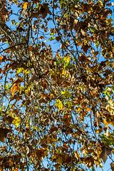 Otoo (martinnarrua) Tags: nikon nikond3100 argentina amateur entre ros concepcin del uruguay afs3518gdx 35mm f18 rbol rboles tree tres otoo autumn hojas hoja leaf leaves nature naturaleza sol soleado sun sunny day