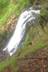 Parque natural de #Gorbeia #Orozko #DePaseoConLarri #Flickr -123 (Jose Asensio Larrinaga (Larri) Larri1276) Tags: 2016 parquenatural gorbeia naturaleza bizkaia orozko euskalherria basquecountry