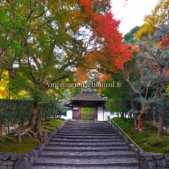 Anrakuji001 (vincemarion) Tags: red fall japan automne rouge temple maple kyoto autumnleaves momiji japon feuille koyo anrakuji erable couleurautomnale