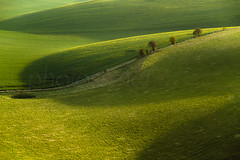 Shadow Games (S l a w e k) Tags: uk morning trees england green grass rural landscape sussex countryside nationalpark spring britain country east hills telephoto undulation rolling southdowns lewes bucolic undulating hawthorns