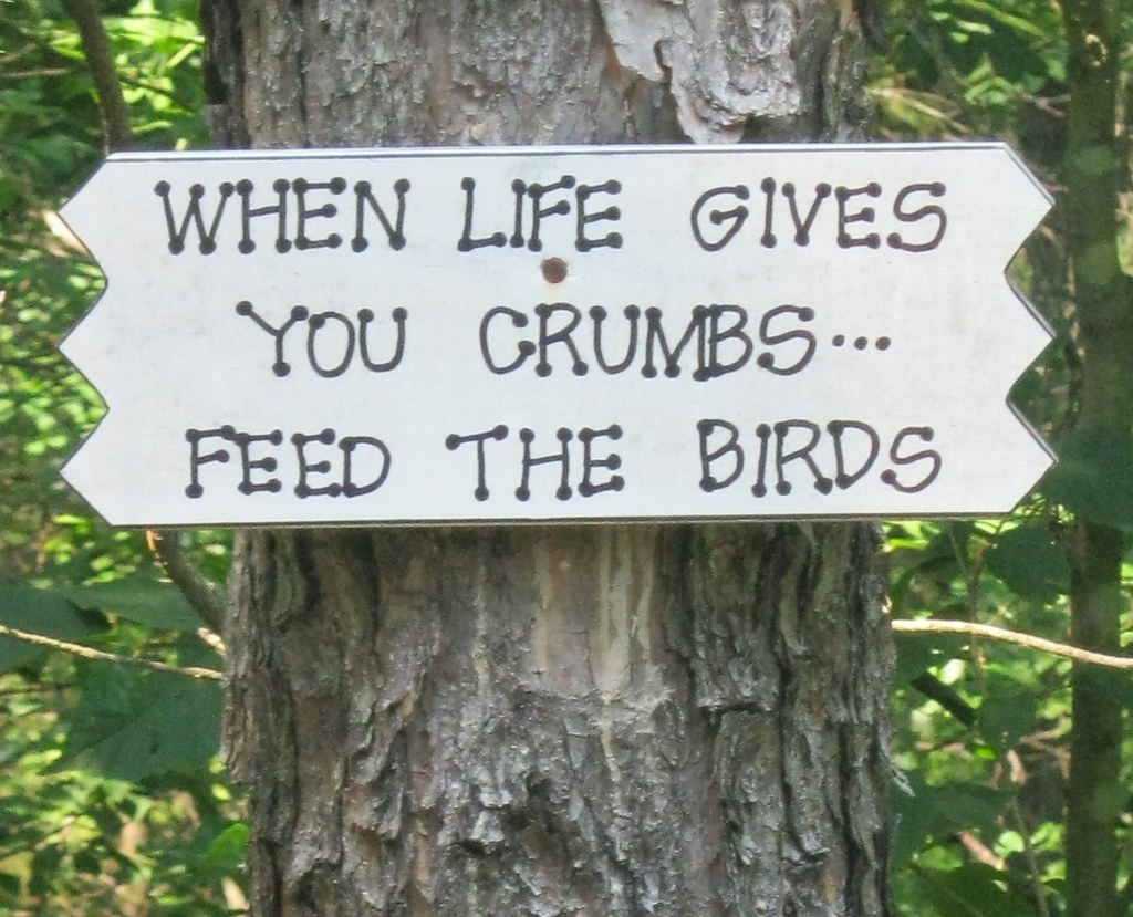 When life gives you crumbs...