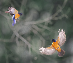 #786  (John&Fish) Tags: bird art nature birds wow photography contemporary taiwan best society 2012 deepavali innamoramento magicunicornverybest thefineartgallery