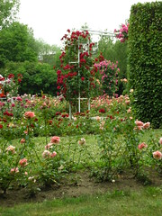Petrin Hill Rose Garden (Yoav Lerman) Tags: roses rose garden prague hill petrin גבעת lerman גן פראג ורד ורדים לרמן פטרין