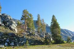 IMG_1649 (jqleenvd) Tags: camping outdoor hiking backpacking anseladamswilderness strenuous sierranationalforest edizalake