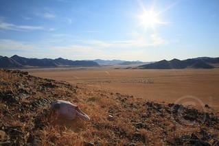 Mongolian Vista