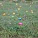 Eggstravaganza 2012