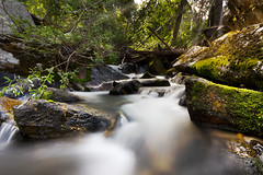 Cool Down (ashergrey) Tags: mountains water bells creek forest utah moss stream wasatch long exposure hiking canyon hike