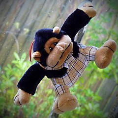 I'm the Monkey (sallyNZ) Tags: monkey scavenger7
