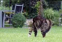 afraid Alisha  07-2012 (Avatarmin) Tags: dog pet cats dogs animal animals cat austria tiere sterreich nikon armin katze katzen haustier pawn tier gettyimages 2012 rodler d7000 nikond7000 072012 arminrodler rodlerarmin