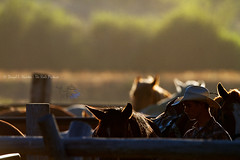 Backlit Cowboy and Horses (Daryl L. Hunter - Hole Picture Photo Safaris) Tags: horses sunrise cowboy backlit wyoming jacksonhole horseherd backlitcowboysjacksonholepreparingtheremudawesternwranglerstetonvillagewyomingunitedstatesusa