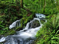 The raging torrent of the Wynlass Beck (Beardy Vulcan) Tags: england water june nationalpark spring beck dusk lakedistrict steam cumbria brook nationaltrust windermere goldenhour torrent 2012 lakedistrictnationalpark millerground wynlassbeck