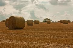 Landscape - After Harvest