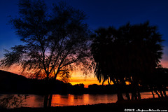 Sunrise Light on the River (Stefano.Minella) Tags: road park street light wild two moon elephant tree male look animal animals photoshop sunrise canon river that stars eos for this is photo bush holidays crossing close with post kenya shots african year  drinking some taken days here went east safari most where national 7d production they elephants usm impala refreshing efs 1022mm spent 41 tsavo silouhette anthill 2012 stefano lightroom minella f3545 cs6 hyraxes