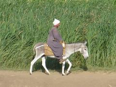 Egyptian and donkey on the banks of the Nile... (shani1709) Tags: egypt donkey egyptian