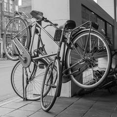 Entangled bicycles (Bart van Dijk (...)) Tags: city urban bw amsterdam blackwhite zwartwit nederland streetphotography squareformat foundart stad noordholland zw stadsarchief straatfotografie stadsarchiefamsterdam sculpturetrouv vierkantformaat 11format cityarchivesamsterdam