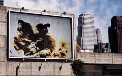 "Modified Photo:  ""Billboard Cat"""