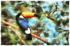 Mine is bigger :) (Leo Bar) Tags: friends texture nature ecology birds painting artwork hummingbird tropical coexistence tucan artdigital awardtree leobar pixinmotion netartii