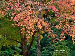 DAO-79366 (Chen Liang Dao  hyperphoto) Tags: taiwan