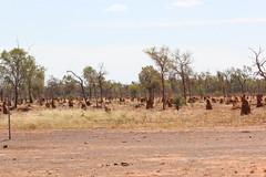 Termite nests in Central Australia (Arthur Chapman) Tags: australia queensland termitemounds termites arid centralqueensland lakegalilee geo:country=australia desertuplands geocode:method=gps geocode:accuracy=100meters geo:alt=297meters