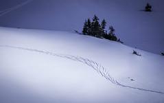 Skispor (eriknst) Tags: mountain snow ski ice norway tracks norwegen olympus 75300mm zuiko mft valdres