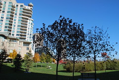 fall_274 (Sascha G Photography) Tags: autumn trees toronto color tree fall leaves leaf nikon seasons waterfront lakeshore indiansummer d60