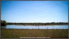 Oostvaardersplassen Lelystad geeft Lucht! (Dynaries) Tags: horses film nature animal mobile movie landscape photography europa fotografie touch natuur dieren umi flevoland lr lelystad mobiel landschap paarden lightroom 0320 2016 plassen konik wildernis konikpaarden oostvaadersplassen wildepaarden oostvaarder denieuwewildernis