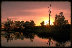 The spaces between (rachFNQ) Tags: morning sky sun nature sunrise dawn nationalpark kakadu colourful yellowwater northernterritory naturephotography kakadunationalpark yellowwaterbillabong