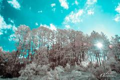 Sitio infrared (Evento em Fotos) Tags: blue brazil sky cloud white nature branco azul brasil nikon d70 sopaulo natureza cu nuvens roberto robertooliveira