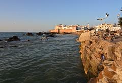 Pomeriggio ad Essaouira (supersky77) Tags: ocean seagull gull atlantic morocco marocco essaouira gabbiano oceano atlantico