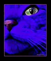 JUST BEYOND THE REALM (Ann Frye) Tags: blue sparkle blacklight abstractcat moonwhiskers catsbymoonwhiskers