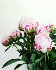 heart full of joy for these beauties. Happy Saturday. (life stories photography) Tags: pink flowers stilllife green leaves square may peony squareformat vase iphone 2016 iphoneography instagramapp uploaded:by=instagram