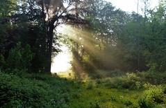 2016-05-13 Secret wood (53)light door (april-mo) Tags: wood trees light mist lumire arbres bois treesinmist
