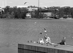 Helsinki scenes (Emptiness of Helsinki) Tags: street sea urban blackandwhite film water birds composition contrast rollei mediumformat finland spring image grain baltic cinematic 120mm selfdeveloped tonality humanelement finnishbay