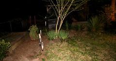 IMG_8641 (jalexartis) Tags: lighting nightphotography night yard dark landscape lights backyard landscaping shrub yucca shrubbery yuccaplant