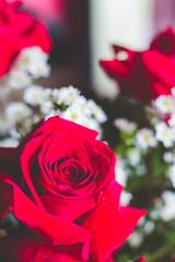 IMG_4143 (Josy'ta) Tags: rose rosas rosascolombianas flowers flores flor diadosnamorados love