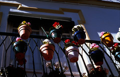 Balcony flowers (Stephen Dowling) Tags: travel autumn film 35mm spain seville agfarsx100 minoltasrt100x rokkor5814